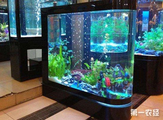 鱼缸水浑浊怎么办?如何让鱼缸水保持清澈?