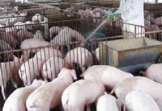 <b>农业农村部:严厉打击多种非洲猪瘟中的违规行为</b>