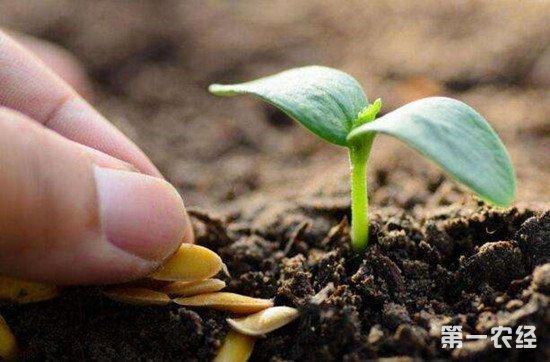 又到春耕时节 购买种子需警惕这些种情况