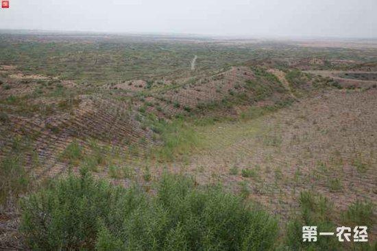 植树节两会说林业:中国人工造林11.8亿亩 对地球生态贡献大