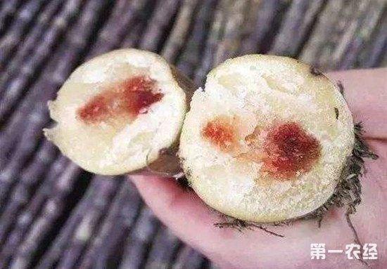 购买食用甘蔗需注意 谨防红心甘蔗食物中毒
