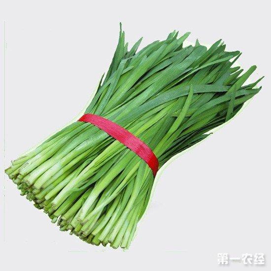 无公害韭菜的种子如何选择?无公害韭菜如何防病虫害