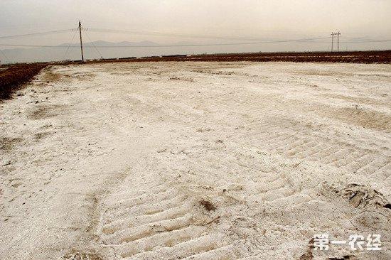 我国盐碱地超15亿亩 人大代表提议加强对盐碱地开发的支持