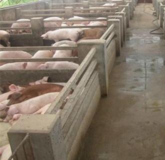如何控制猪舍的环境?猪舍的管理要点