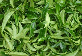 福建武夷山正式成立茶产业研究院 推动茶产业发展