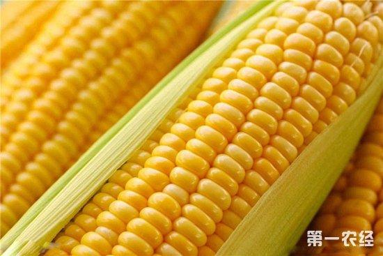 当前玉米价格浮动较大,是什么左右了市场行情?