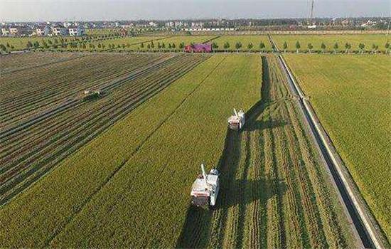 科学种地让杭锦后旗环境变好 农产品产量更高