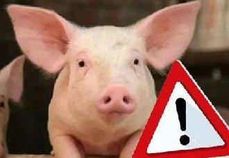 <b>非洲猪瘟后复养猪场的注意事项</b>