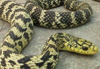 要如何控制大王蛇的养殖密度?