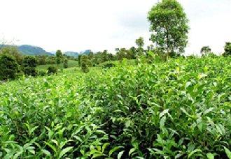 浙江杭州召开第三届中国国际茶叶博览会筹备会