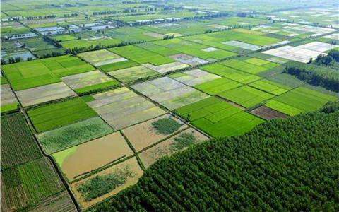 四川省推进高品质粮食生产 预计今年新增高标准农田380万亩