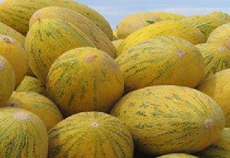 哈密瓜都有哪些品种?常见的五个哈密瓜品种介绍