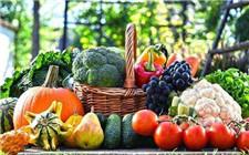 科技引导农业技术升级 黑龙江果蔬出口创新高