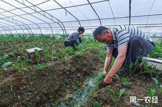 大棚种植如何进行除草?大棚除草注意事项