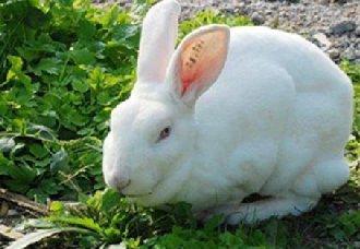 兔子一斤多少钱?