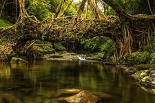 """""""3.21国际森林日""""重庆100多处森林旅游景点免费开放"""