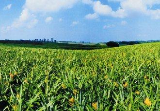 <b>增值肥料新产品发展已上升为国家战略</b>