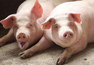 <b>农业科学院朱增勇:猪价未来上涨趋势确立</b>
