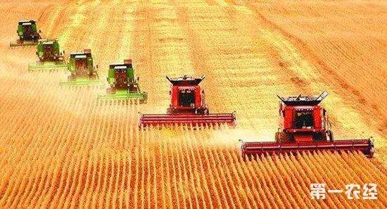 中国粮食安全要靠自己 粮食进口不宜过多