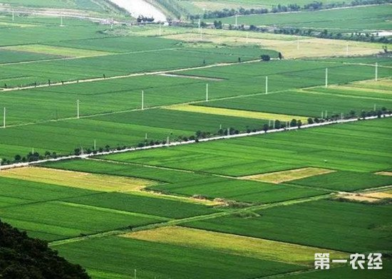 坚持农业绿色发展理念 推广绿色种植