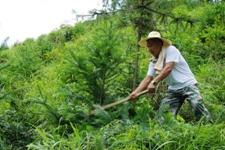 隆回县荣获湖南省林业林业政务信息前10强先进单位荣誉称号