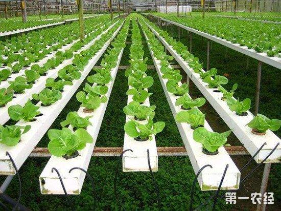 我国农业导向将由增产转向提质 质量兴农是未来农业发展重点