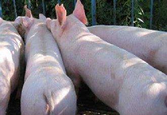 全球三月新增744起非洲猪瘟,2019年养猪能赚钱吗?