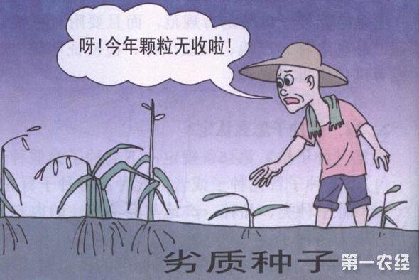 四川通江:农资打假查获125公斤各类违法种子