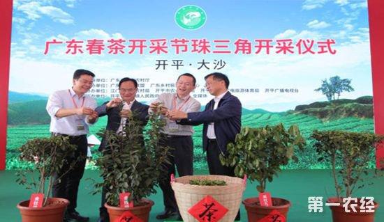 茶,茶产业,春茶