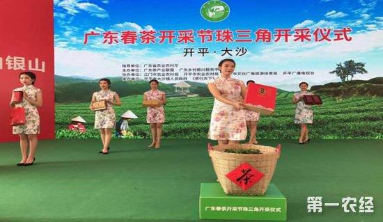 10.茶,茶产业,春茶
