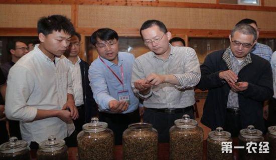 10044.茶,茶产业,春茶