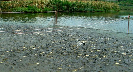 农业农村部发布水产养殖用药减量方案 提高水产品质量和安全性