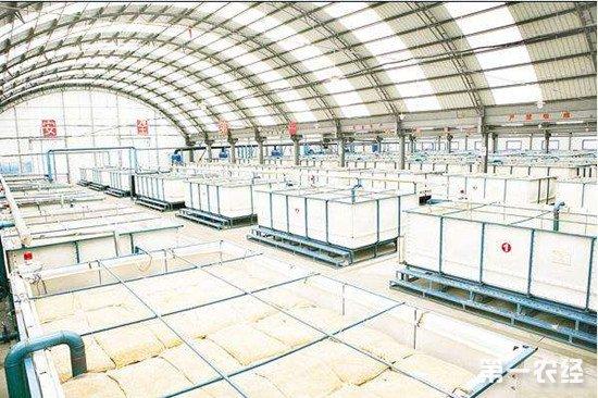 黑龙江实施水稻智能浸种催芽补贴