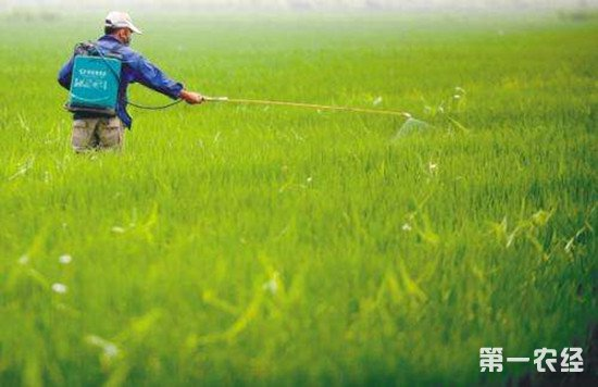 稻田除草注意事项:除草剂的正确使用方法
