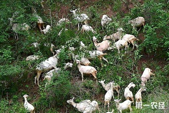 近日国内活羊市场行情如何呢?全国最新活羊价格汇总!