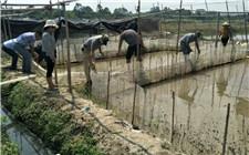 经济发展不能以污染生活环境为代价 福建秀篆镇清理牛蛙养殖场