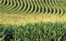 山东省严厉打击转基因作物非法种植