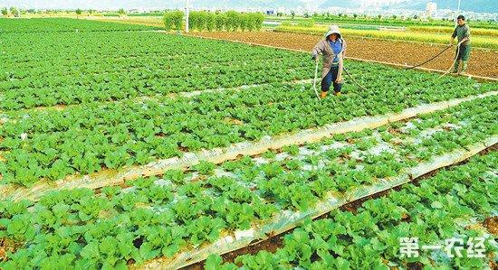 蔬菜绿色防虫方法 不用农药怎么防虫?
