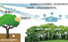 2019年我国将开展第二次全国林业碳汇计量监测工作