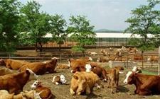 自家农田上可以建牛羊或其它牲畜养殖场吗?