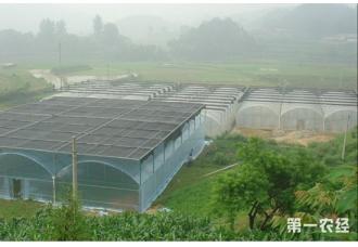 """<b>温室大棚里的""""种植床"""",蔬菜一年能种十六茬</b>"""