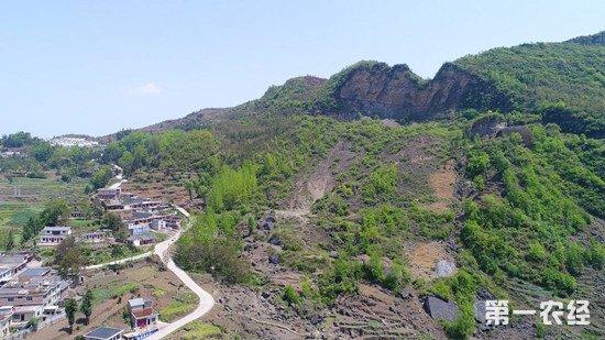 贵州省黔西县:调整种植结构 促农民增收