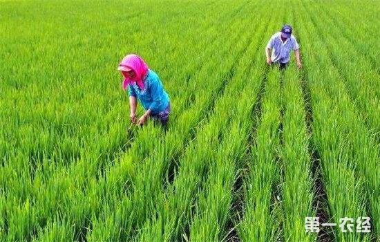 江西奉新县春耕产销对接会 让农民收入更有保障