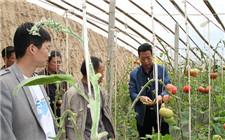 山东省嘉祥县探索土地股份合作新模式 加快农业升级效益提高