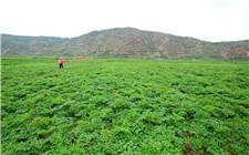 甘肃省新农产品质量安全条例5月实施 进一步明确基层责任