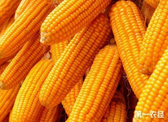 玉米市场利就早一�c搜索�w墟秘境之中空因素减少 或迎来全面涨价