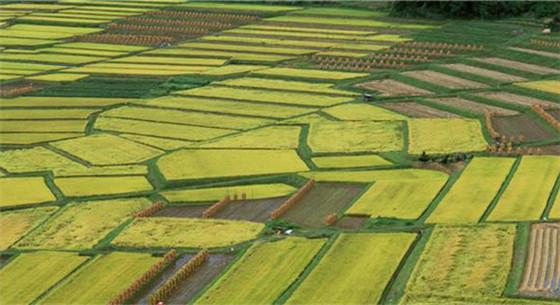 全国领先:安徽2018年建成高标准农田400万亩