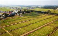 农业农村部:2019年高标准农田建设目标8000万亩