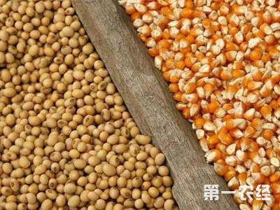 市场预警专家:看好玉米市场行情,未来大豆不容乐观!