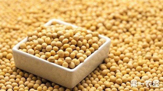 我国大豆单产不足美国一半 农民每卖一斤大豆亏7毛